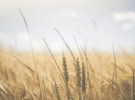 Pratiche sleali nell'agroalimentare, ecco le novità