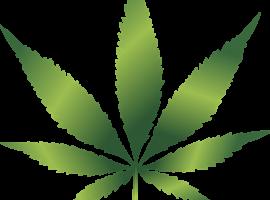 Il tribunale Ue mette al bando la foglia di cannabis